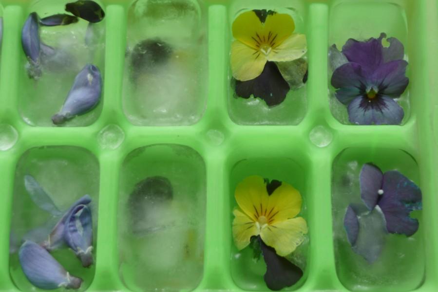Glaçons d'herbes, glaçons de fleurs